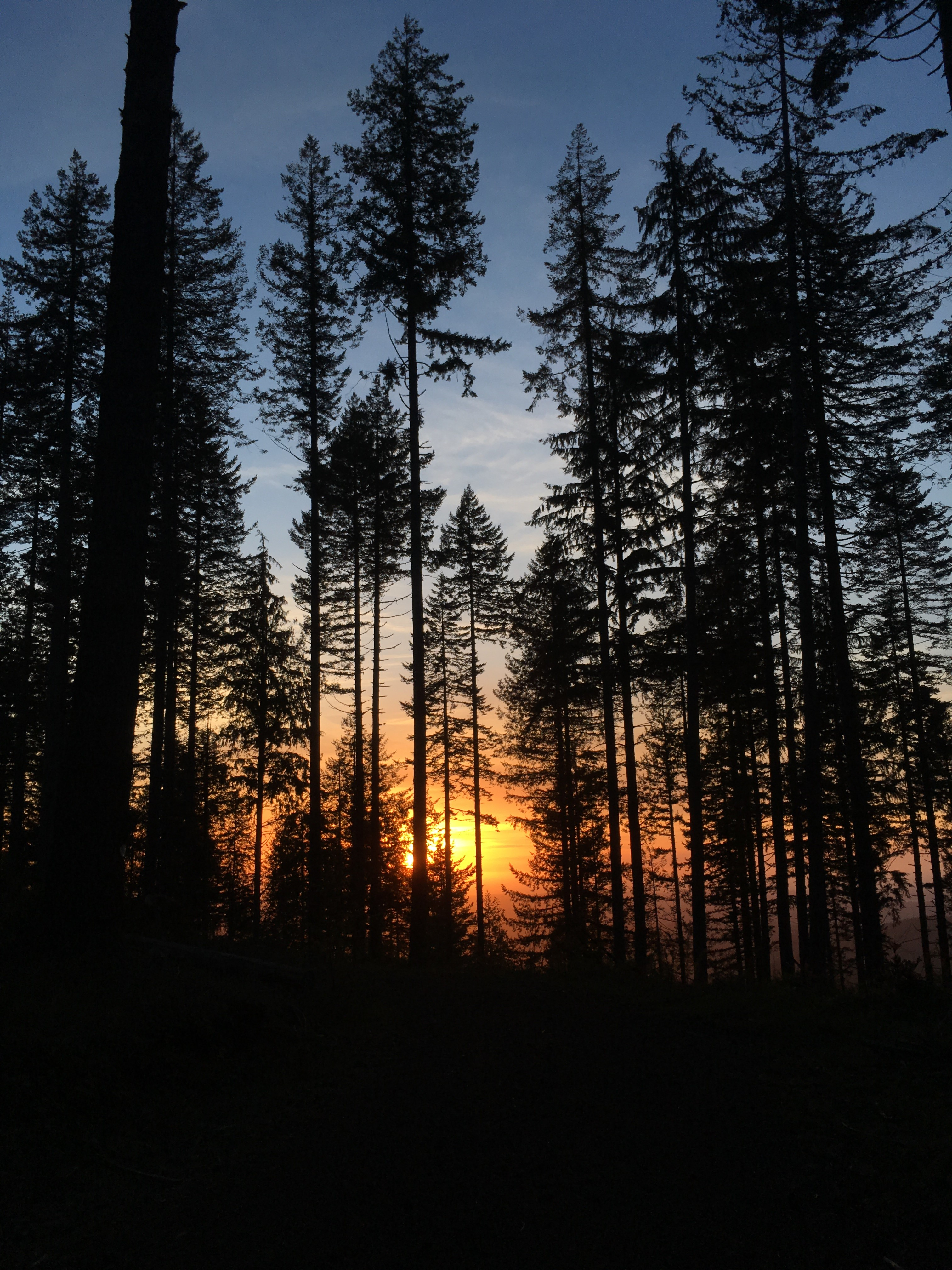 Dark trees in front of a sunset